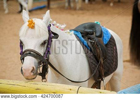 Photo Of A White Pony In A Stable. High Quality Photo