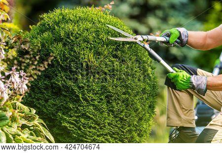 Caucasian Gardener And Backyard Garden Trees Trimming Job Using Large Scissors.