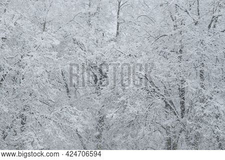 Trees Covered With A Large Layer Of Snow. Snow-covered Branches, Snowfall. Winter Landscape.