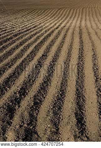 Large Furrows In A Plowed Field For Spring Planting, Vertical View