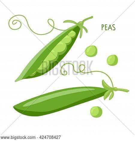 Pea Pod Vegetable. Green Peas Vector Illustration. Vegetable Organic Eco Bio Farm Products. For Logo