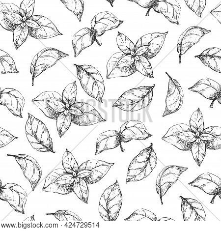 Basil Grass Seamless Pattern On White Background