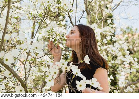A Beautiful Young Girl Sniffs The White Flowers Of The Beautiful Cornus Florida Plant