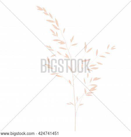Vector Stock Illustration Of Pampas Grass. Cream Branch Of Dry Grass. Panicle Cortaderia Selloana So