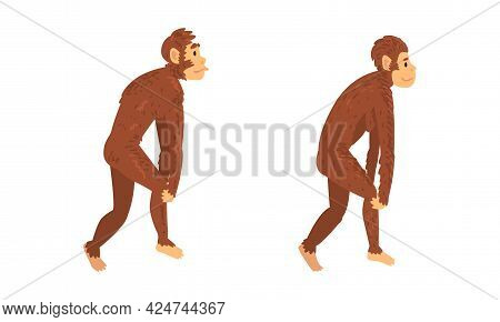 Monkey Or Primate As Human Evolution Stage And Gradual Development Vector Set