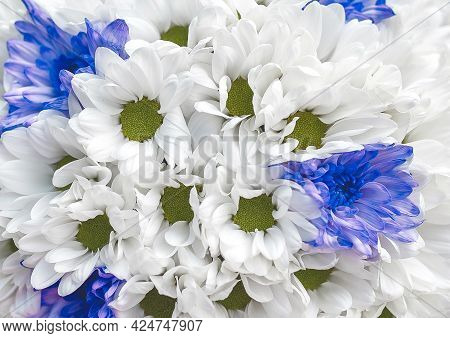 White And Blue Fresh Flowers In Wedding Bouquet Texture Background, Close Up.
