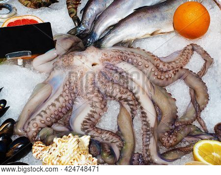 Octopus Fish And Mussels Lie In The Ice. Seafood Set. Showcase In A Restaurant