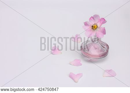 Women's Perfume, Pink Flower, Petals On A White Background. The Concept Of Perfumery And Tenderness,