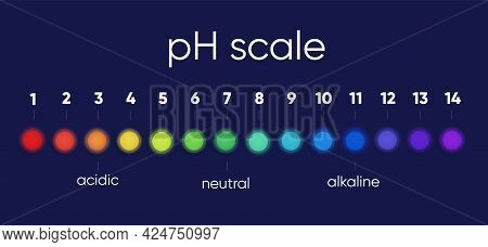 Scale Diagram Of The Ph Scale Value For Acidic And Alkaline Solutions, An Infographic Of The Acid-ba