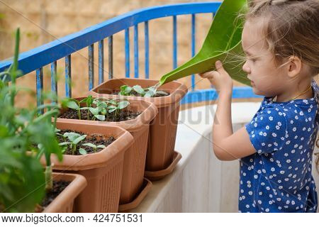 Concentrated Little Girl Waters Homegrown Greenery With A Green Garden Watering Can At Balcony. Chil