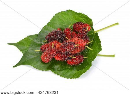 Mulberry And Mulberry Leaf  Isolated On White Background