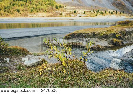 Scenic Nature Background With Shrub Golden Leaves Near Water Stream In Vivid Sunshine. Wild Mountain