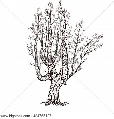 Mystic Tree Sketch, Spooky Fall Tree Without Leaves, Winter Tree, Black Illustration Clipart Png
