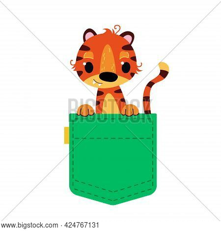 Tiger In A Green Pocket. A Striped Tiger Cub Looks Out Of His Pocket. Vector Illustration In Cartoon