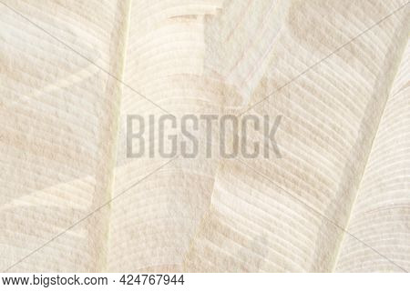 Banana leaf pattern on a beige cement background illustration