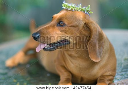 Golden Puppy With Flower Crown