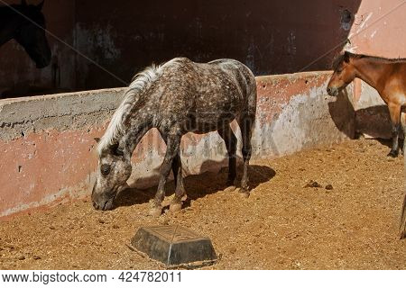 Photo Of A Brown Pony In A Stable. High Quality Photo
