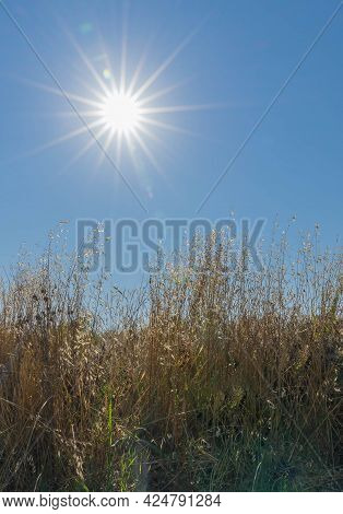 Image Of Sun Rays Over Dry Grass In A Field In Latina Province, Fronzinone, Italy
