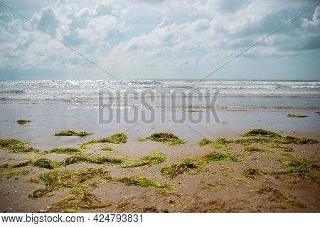 Ecological Problem. Green Algae Thrown Out Of The Water Lie On The Sandy Seashore. Sandy Beach Cover