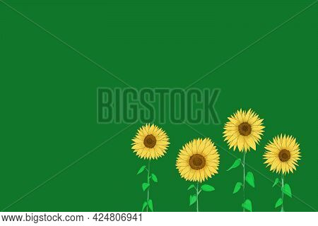 Sketch Drawing Sunflower Plant Yellow Flower Blooming On Green Background