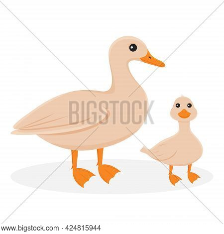 Isolated Illustration Of A Duck With A Duckling. Farm Birds On A White Background In Cartoon Style