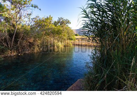 A Large, Clear Freshwater Pool Surrounded By Vegetation And Reeds In Ein Shokek, Valley Of The Sprin