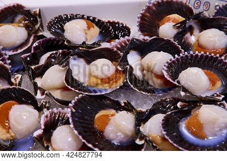Several Scallops In A Market. It Is One Of The Best Known Seafood In Galicia, In Spain