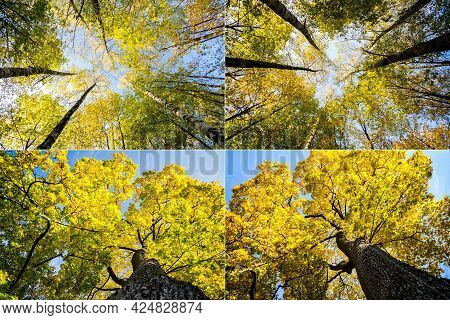 Collection Of Images With Autumn Trees With Yellowing Leaves Against The Sky