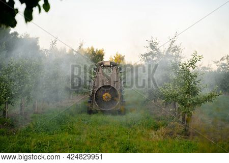 A Red Tractor Sprays Pesticides In An Apple Orchard. Spraying An Apple Tree With A Tractor