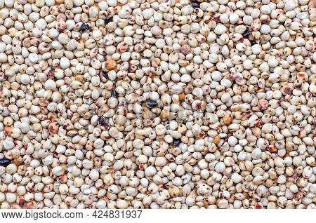 Top View Of Dry Organic Millet Seeds Background, For Healthy Food Ingredient Or Agricultural Product