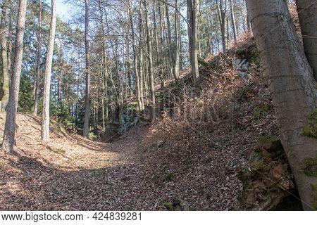 A Forest In Bavaria In Autumn, Schwandorf