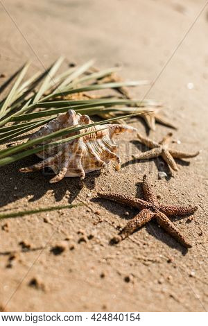 Seashells And Seastars On The Sand, Summer Beach Background Travel Concept. Love, Romantic Nature La
