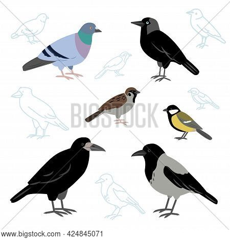 Vector Collection Of City Birds Isolated On A White Background. European Birds, Crow, Pigeon, Jackda