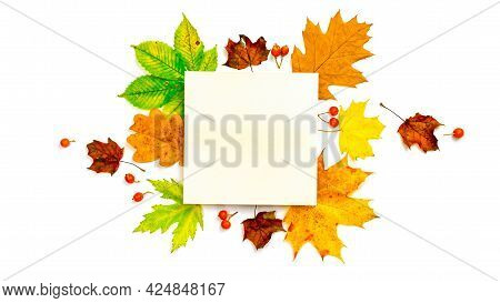 Autumn Leaf Texture. Colourful Dried Leaves, Red Berries In Autumn Composition Isolated On White Bac