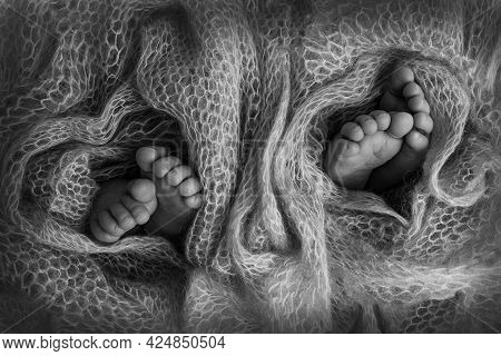 Legs Of Newborn Twins. Two Pairs Of Baby Feet Covered With Wool From A Soft Plaid. Tiny Legs Of Newb
