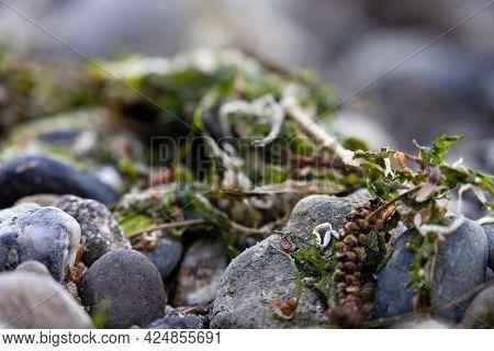Pebbles And Small Stones Outside In Natural Shoreline Washington Beach