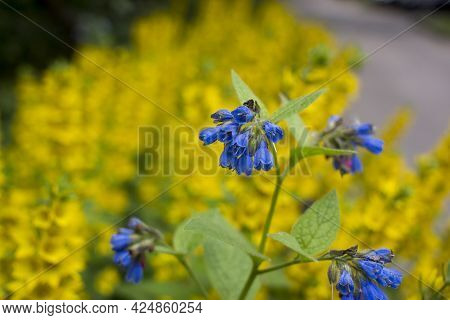 Photography Of Flowerbed In Summer Day. Natural Fresh Floral Background. Suitable For Greeting Card,