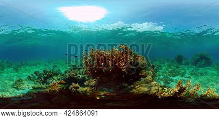 Beautiful Underwater Landscape With Tropical Fish And Corals. Hard And Soft Corals, Underwater Lands