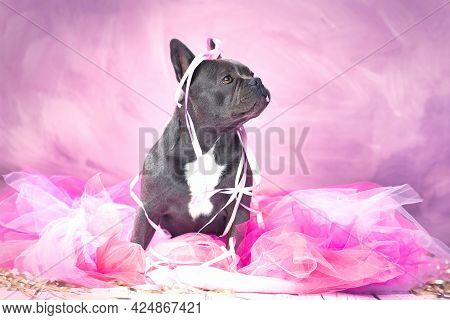 Black French Bulldog Dog In Pink Tutu Skirt With Party Streamers