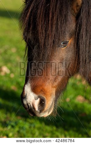 Horse In Gautegiz De Arteaga, Bizkaia, Basque Country, Spain