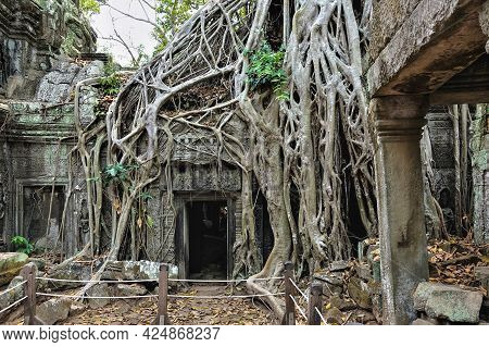 Trees Grow On The Ruins Of The Ancient Ta Prohm Temple. Thick Roots Tightly Braid The Dilapidated Wa