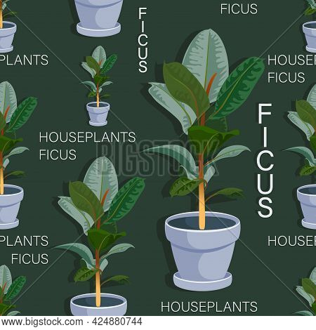 Ficus Tree. Vector Background. Beautiful Houseplant In Ceramic Pot Isolated. Floral Seamless Pattern
