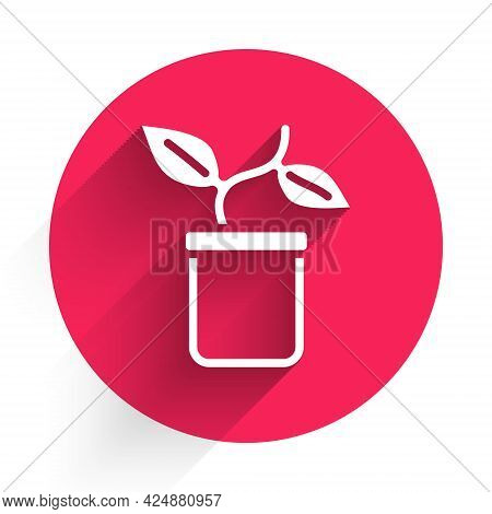 White Plant In Pot Icon Isolated With Long Shadow. Plant Growing In A Pot. Potted Plant Sign. Red Ci