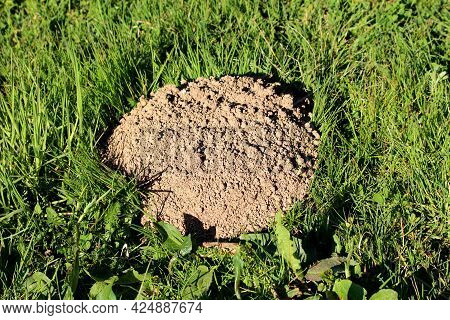 Perfectly Shaped Molehill Or Conical Mound Of Loose Soil Raised By Small Burrowing Mammals Surrounde