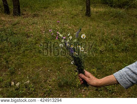 An Elderly White Woman's Hand Holds A Bouquet Of Wildflowers Against A Background Of Green Forest. F