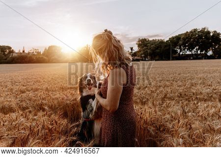 Senior Caucasian Woman Playing With Border Collie Dog On Wheat Field. Friendship Concept
