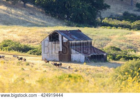 Old Barn At Joseph D Grant County Park. Santa Clara County, California, Usa.