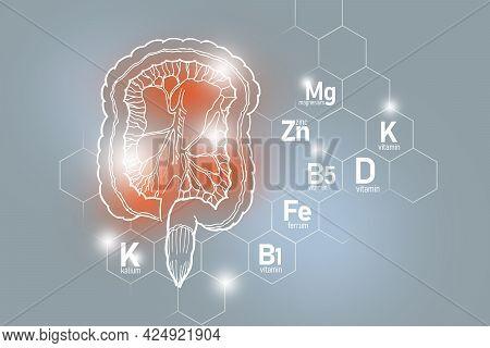 Essential Nutrients For Intestine Health Including Kalium, Ferrum, Magnesium, Vitamin D. Design Set