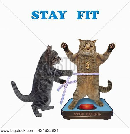 A Gray Cat With A Soft Measure Tape Is Standing Near A Weigh Scale. Stay Fit. Stop Eating. White Bac
