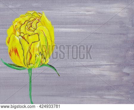 Yellow Tulip A Spring Flower On A Gray Background Is Painted In Oil The Texture Of Oil And A Palette